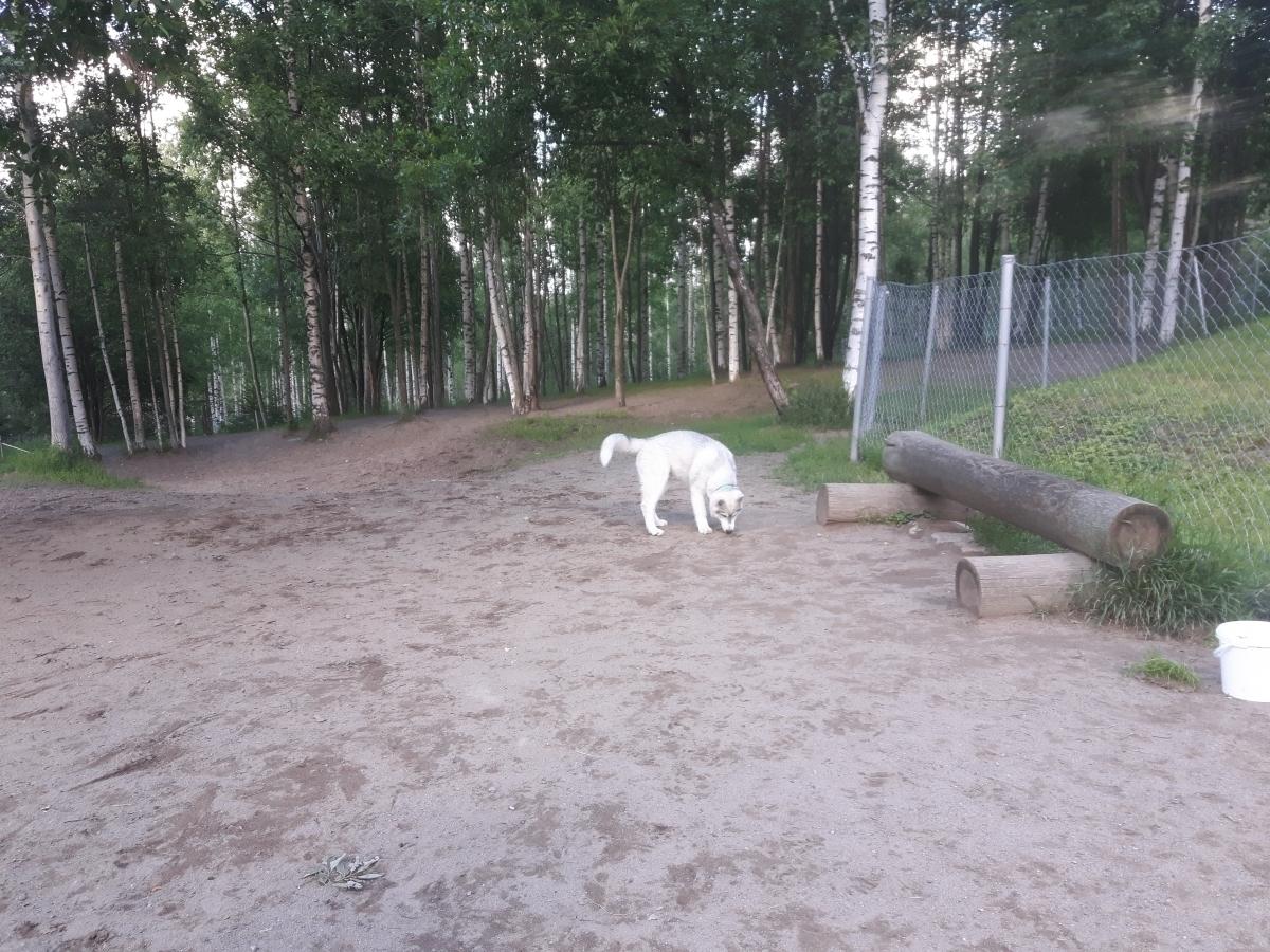 Koirapuisto Kuopio